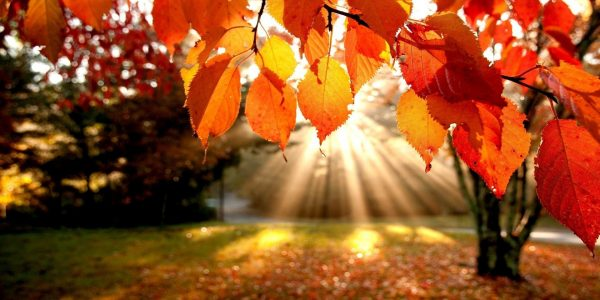 Why to Get Excited Over Fall